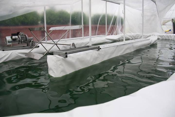 impianto pilota vasca spirulina ApuliaKundi